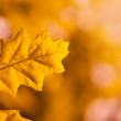 Leaf of a tree in autumn — Stock Photo #52661851