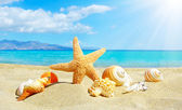 Summer beach with starfish and shells — Stock Photo