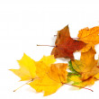 Autumn dry maple leafs at corner — Stock Photo #54986991