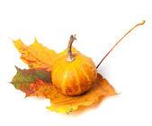 Small decorative pumpkin on autumn maple-leaf — Stock Photo