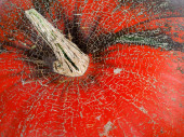 Top of red ripe pumpkin — Stock Photo