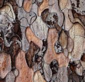 Wooden texture of pine-tree — Stock Photo
