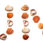 J U N E text composed of seashells — Stock Photo #72500641