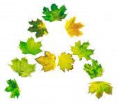 Letter A composed of yellowed maple leafs — Stock Photo
