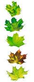 Lettera che ho composto di multicolor maple leafs — Foto Stock