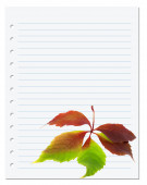 Exercise book with multicolor virginia creeper leaf — Stock Photo