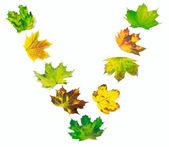 字母 V 组成的多色枫树叶子 — 图库照片