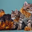 Christmas group portrait of kittens — Stock Photo #54215093