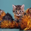 Christmas group portrait of kittens — Stock Photo #54216241