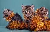 Christmas group portrait of kittens — Stock Photo