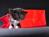Black kitten walking out of gift bag — Stock Photo