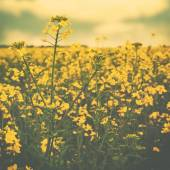 Wild yellow flowers — Stock Photo