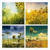 Set of autumnal backgrounds — Stock Photo