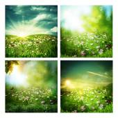 Set of assorted summer backgrounds — Stock Photo