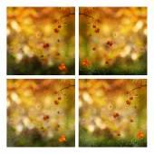 Set of autumnal seasonal backgrounds — Stock Photo