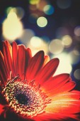 Red flower background — Stock Photo