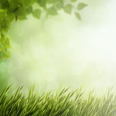 Summer natural background — Stock Photo
