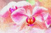 Pink orchid, fine art simulation — Stock Photo