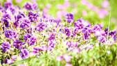 Beauty wild flowers on meadow — Stock Photo