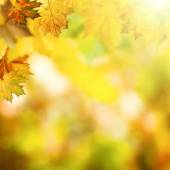 Autumnal background with leaves — Stock Photo