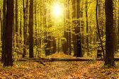 Foresta d'autunno — Foto Stock