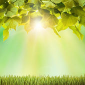 Spring green field grass with sunlight and leaves — Stock Photo
