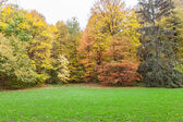 Autumn forest trees — Stock Photo