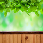 Green leaves and wood fence — Stock Photo