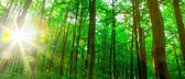 Beautiful forest trees. — Stock Photo