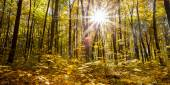 Autumn forest trees — Zdjęcie stockowe