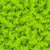 Leaves — Stock Photo