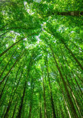 Forest tree tops background — Stock Photo