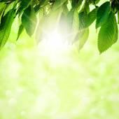 List stromu — Stock fotografie