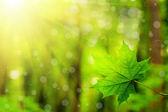 Folha de árvores de floresta. — Fotografia Stock