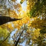 Autumn forest — Stock Photo #81003656