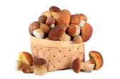 King boletus mushrooms — Stock Photo