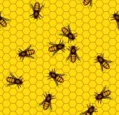 Bee on honeycomb pattern — Stock Vector