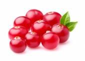 Fresh cranberry — Stock Photo