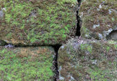 Old stone wall overgrown with moss — Stock Photo