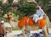 Arab man sitting on a camel  in Dubai — Stock Photo