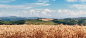 Rural landscape in Tuscany — Stock Photo