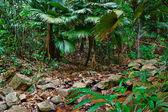 Tropical Asia jungles — Photo
