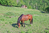 Horse in pasture — Stock Photo