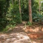 Wild tropical jungles — Stock Photo #65867565