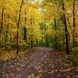 Pathway in the autumn forest — Stock Photo #65987209