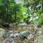 Wild tropical jungles — Stock Photo #67046545