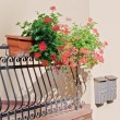 Flowers in pots on the balcony — Stock Photo #67046945