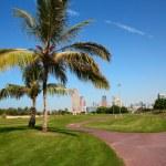 Park in Dubai City — Stock Photo #67235323