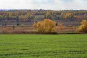 Agricultural field in Europe — Stockfoto