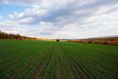 Agricultural field in Europe — Stock Photo